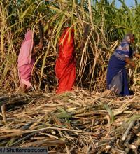 Read more at: The Brides for Survival: Tracking the Invisible Pandemic of Early Marriages in India (September 7, 2020)